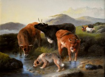 Cattle & Dog Watering