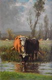Cattle Watering