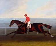 Racehorse with Jockey Up